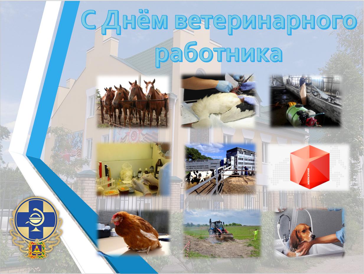 День ветеринарного работника России Википедия 50
